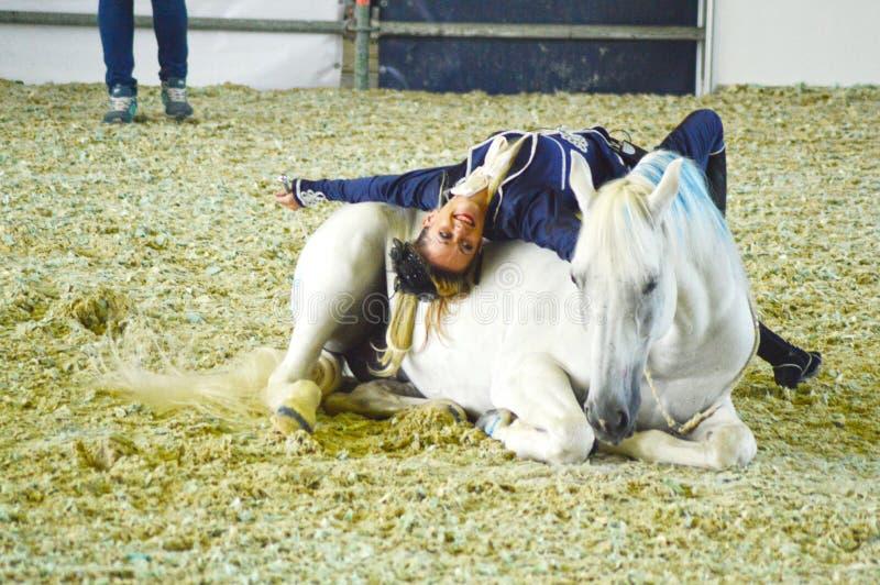 Show för häst för Moskvaridningkorridor internationell Kvinnajockeyn i blått klär den kvinnliga ryttaren på en vit häst beautiful arkivfoton