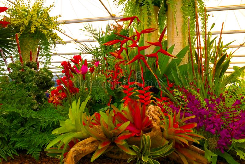Show Garden with exotic tiger lilies flowers royalty free stock photos