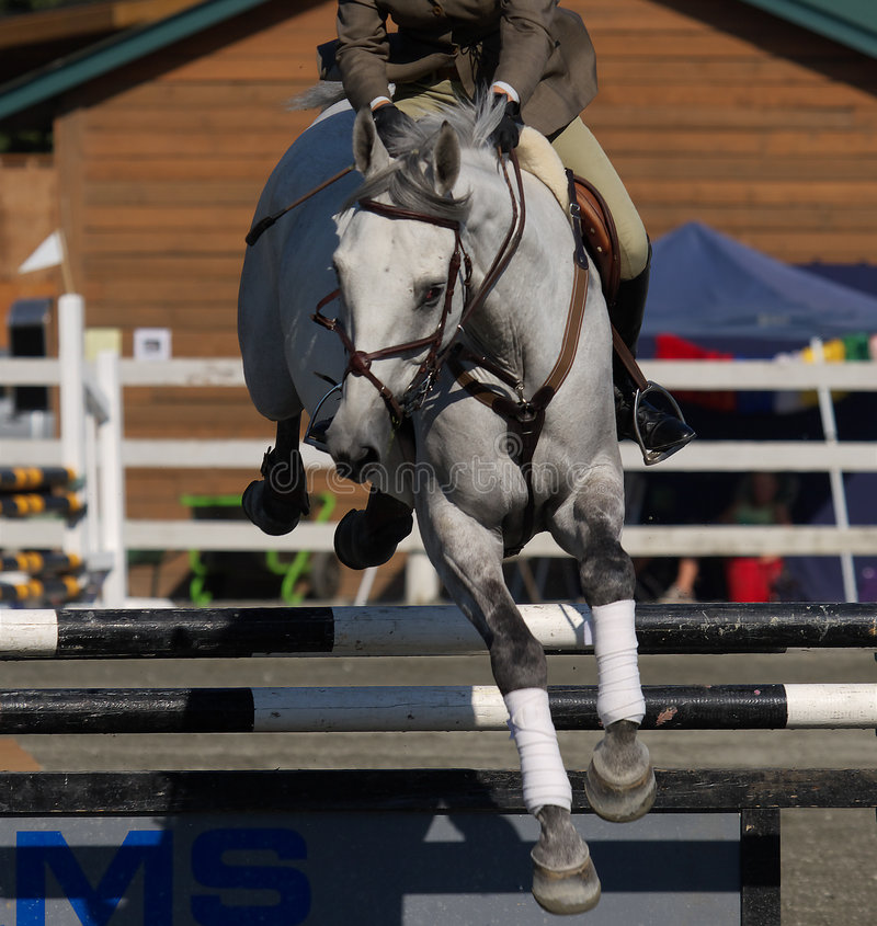 Show jumper stock image