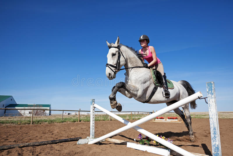Show Jumper. A beautiful, dappled gray horse with rider, jumping a hurdle stock images