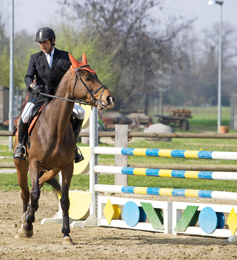 Download Show jumping editorial image. Image of event, horse, jumping - 20276655