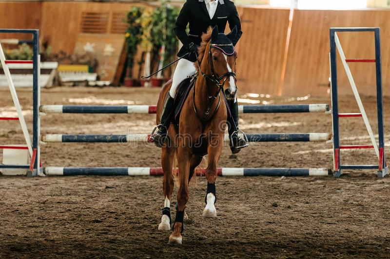 Show jumping competition. Riding equestrian event royalty free stock photography