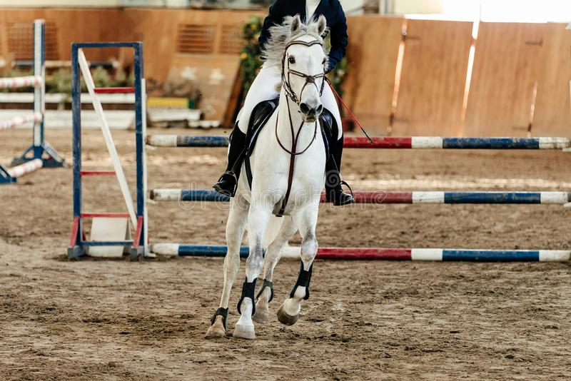 Show jumping competition. Riding woman equestrian event stock photo
