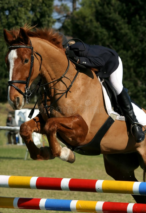 Free Show Jumping Horse And Rider Royalty Free Stock Images - 5653789