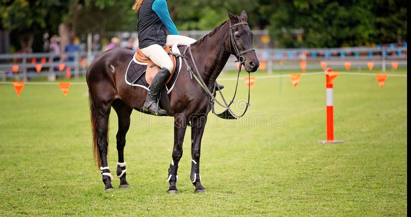 Show Jumping Horse And Rider. Waiting for their turn to compete at a country fair stock photography