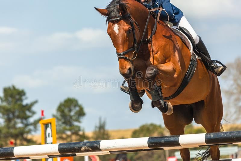Show Jumping Horse Closeup Action. Show jumping horse rider unidentified closeup jump action over poles royalty free stock photos
