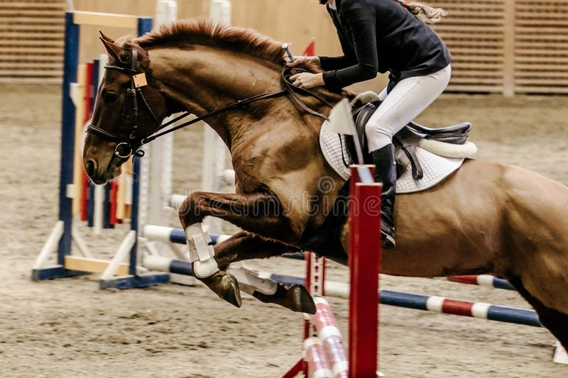 Show jumping woman rider. Horse attempts in obstacle royalty free stock image