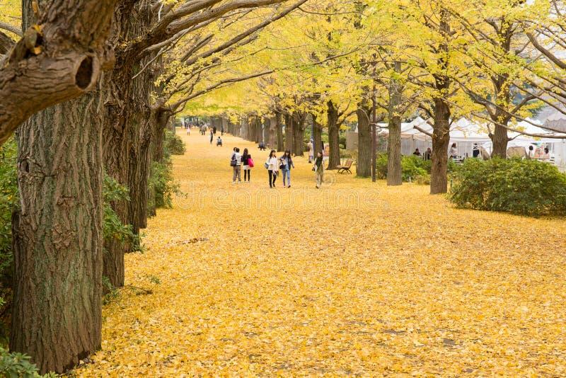 Showa Kenen park fotografia royalty free