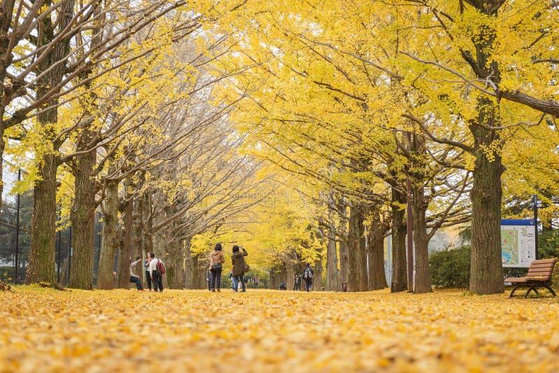 Showa Kenen park zdjęcie royalty free