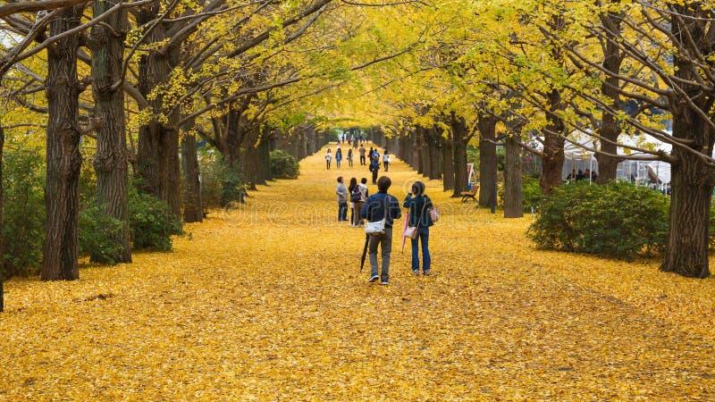 Showa Kenen park zdjęcie stock