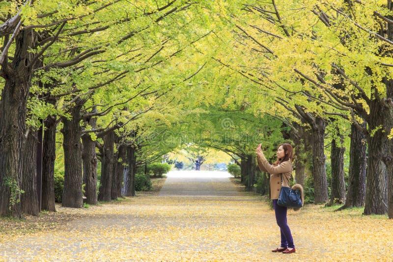 Showa Memorial Park fotografia de stock