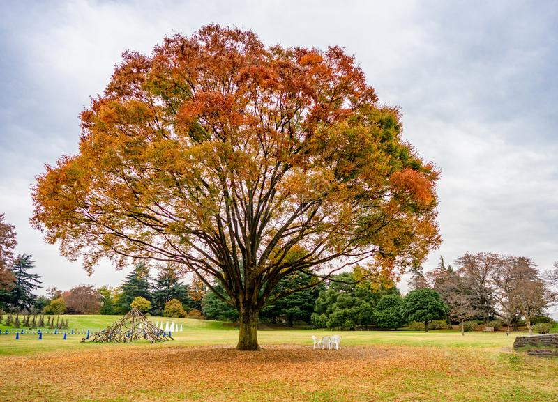 Showa memorial park Showa Kinen Koen in Autumn. The most famous place to visit in Japan stock photography