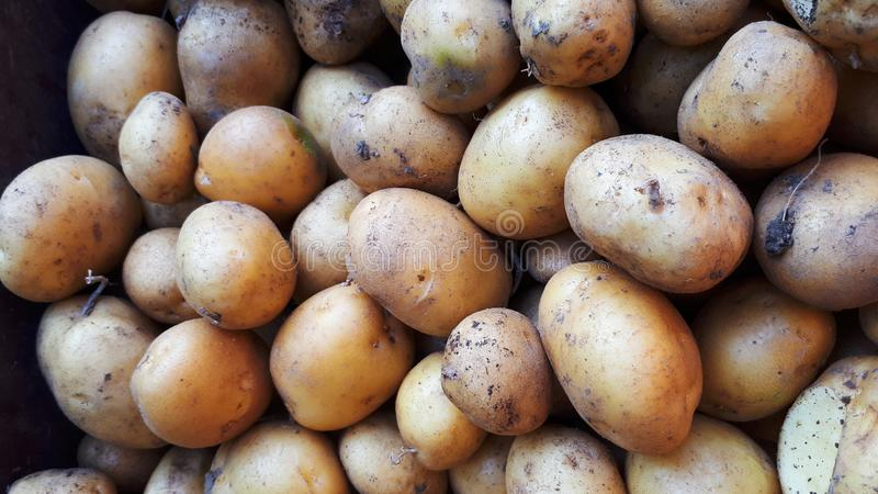 Showcase with potatoes on the Street Market. Close-up. Vegetables. Of the store stock image
