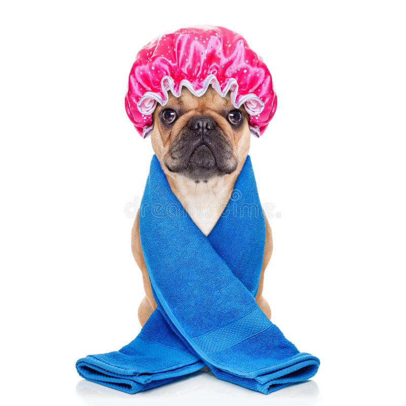 Shower dog royalty free stock photography