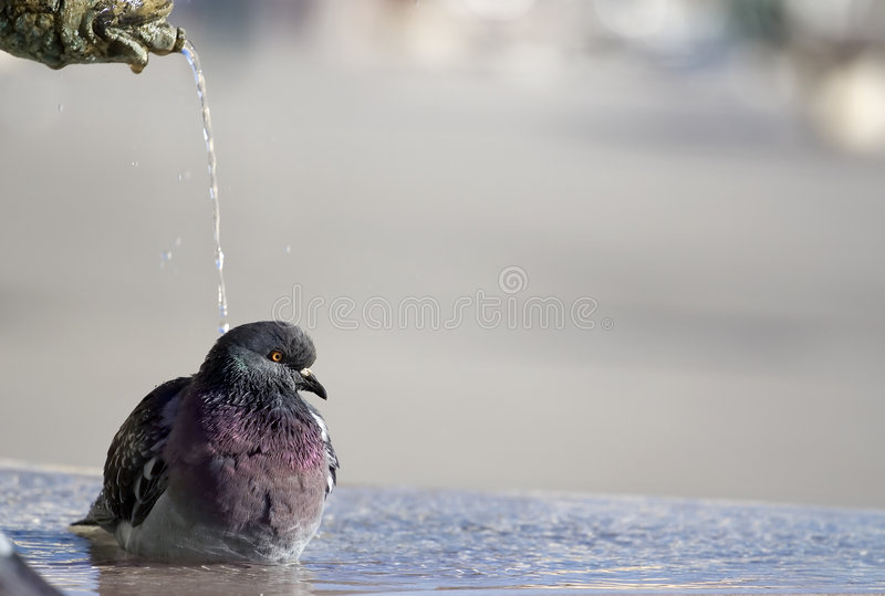 Download Shower time stock image. Image of cool, enjoyment, happy - 2309457