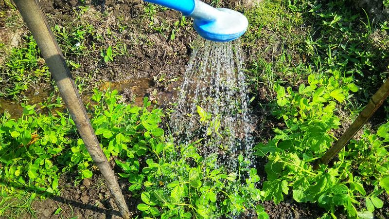 Showering plants with fresh water. Green stock photos
