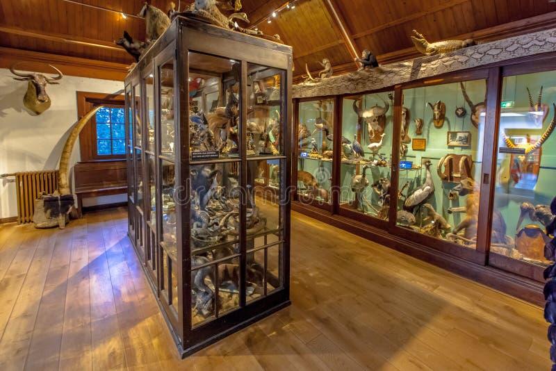 showfall i museum av naturhistoria Natura Docet arkivfoto
