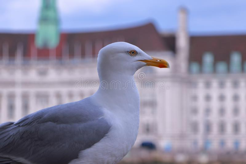 Sides of the seagull stock image