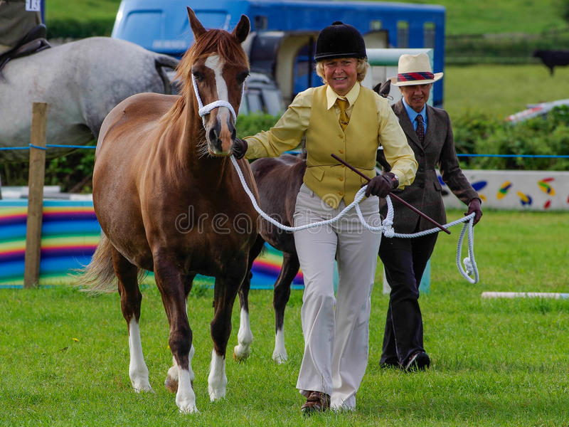 Showing horse. A lady showing a horse at the North Lonsdale Agricultural Show stock images