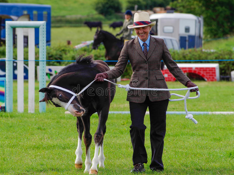Showing horse. A lady showing a horse at the North Lonsdale Agricultural Show stock image