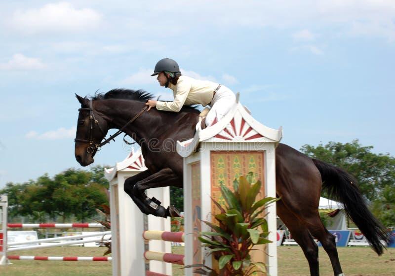 showjumping 2010 premiercup лошади стоковое фото