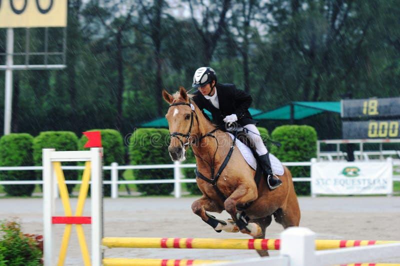 Showjumping ecuestre - demostración 2013 del caballo de la STC fotos de archivo