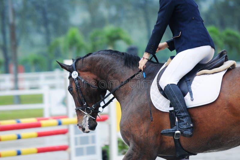 Showjumping equestre immagine stock