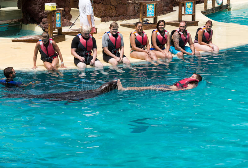 Shows Sea Lions In The Pool Oasis Park Fuerteventura Editorial Photography Image Of Island