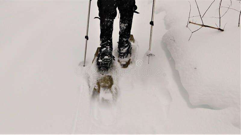 Showshoer que anda na neve profunda imagem de stock