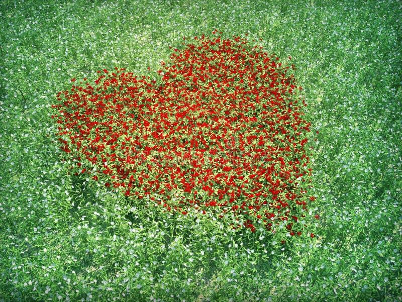 Shpaed het rode hart van de weide bloemen stock foto's