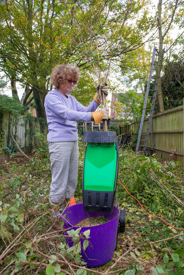 Shredding Branches. Woman in her garden putting small branches into a shredding machine stock image
