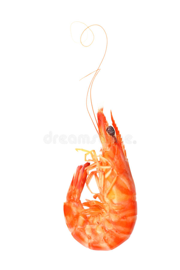 Free Shrimp Royalty Free Stock Photography - 11357647