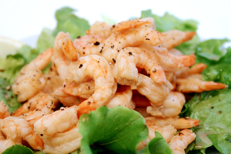 Download Shrimp stock photo. Image of cuisine, chef, dish, appetizers - 169578