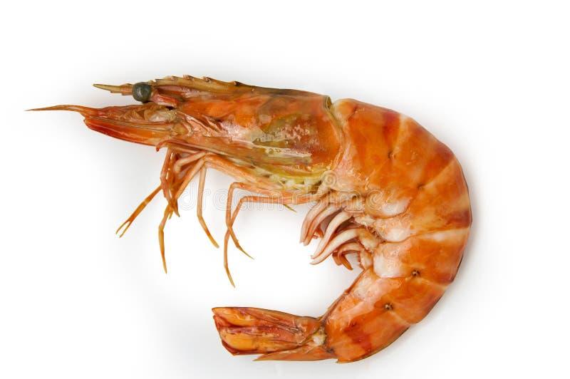 Download Shrimp stock image. Image of edible, shell, prawn, sugpo - 17785843