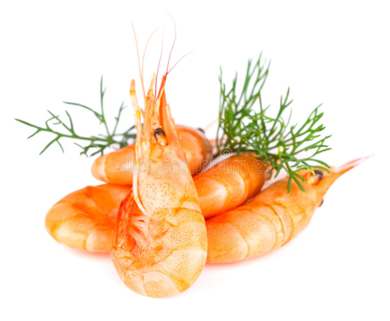 Download Shrimp stock photo. Image of fish, sandwich, snack, food - 21303770