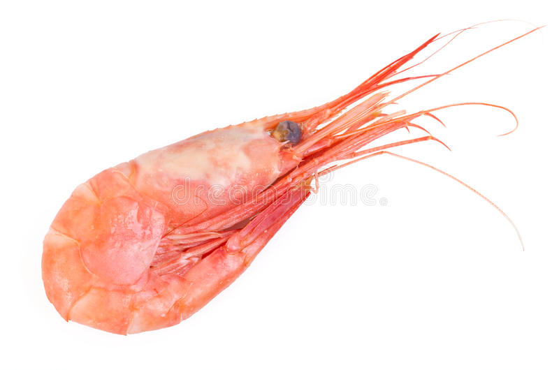 Download Shrimp Royalty Free Stock Images - Image: 24967029