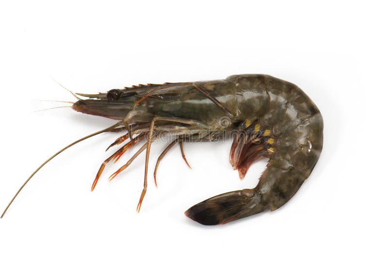 Download Shrimp stock photo. Image of shellfish, shell, delicious - 28790166