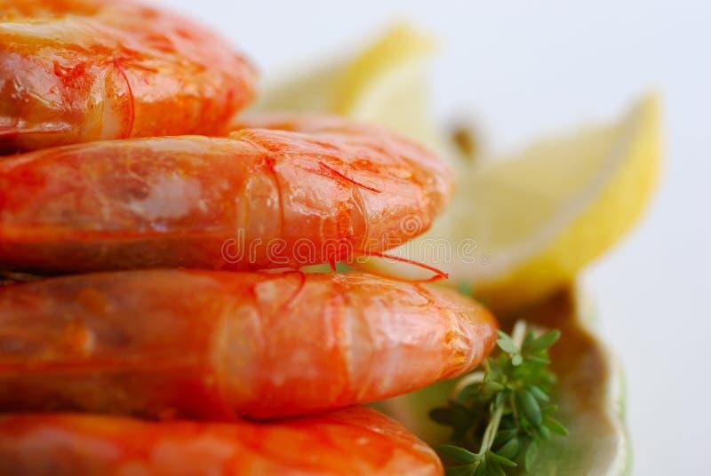 Shrimp stock images