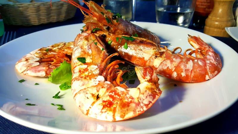 shrimp fotografia de stock royalty free