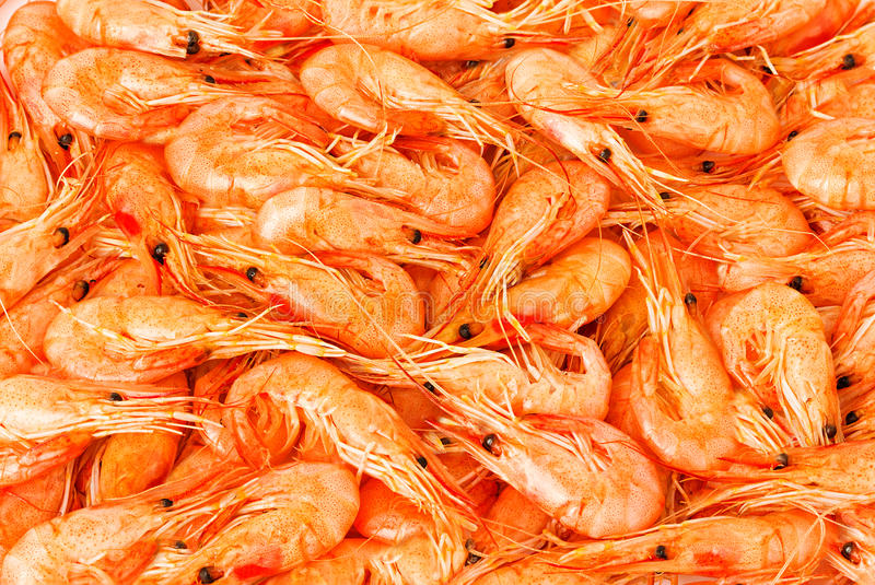 Download Shrimp cocktail background stock photo. Image of cooked - 39514628