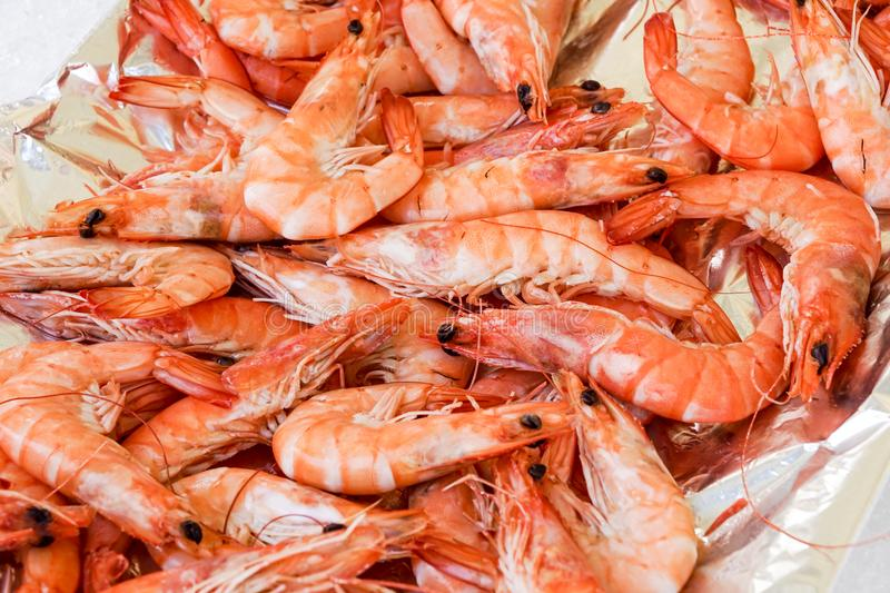 Shrimp cocktail background with a close up view of a group of fresh delicious refrigerated crustaceans as gourmet royalty free stock images