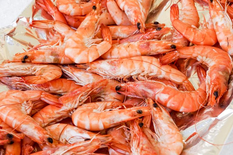 Shrimp cocktail background with a close up view of a group of fresh delicious refrigerated crustaceans as gourmet. Seafood for a party or dinner at a restaurant royalty free stock image