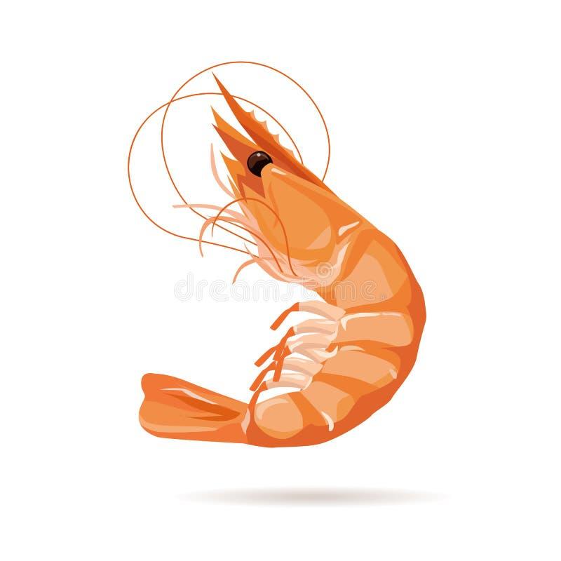Shrimp, digital painting. Shrimp, digital painting, illustration and design royalty free illustration