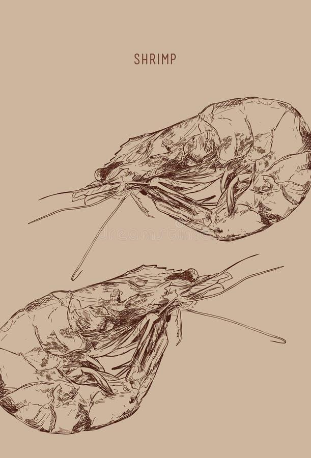 Shrimp. Engraved art. Delicious marine food menu sketch. Ed objects. Use for restaurant, meal, market, store, menu, party decoration, other design stock illustration
