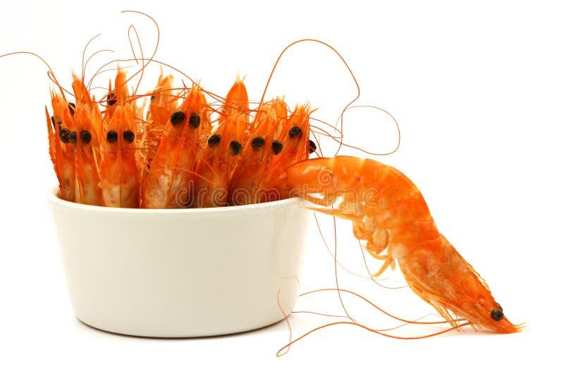 Shrimp escape royalty free stock photography