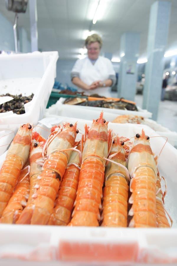 Shrimp in the fish market stock photos