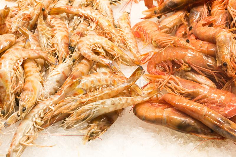 Shrimp in the fresh market. Fresh seafood on the counter stock image