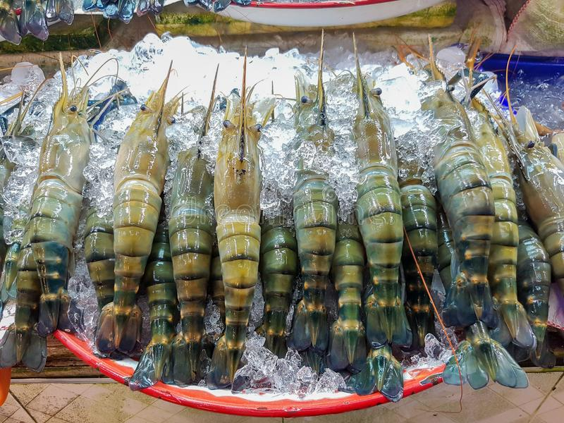 Shrimp frozen in the market. Seafood royalty free stock images