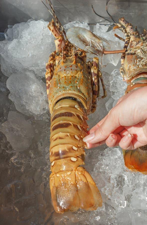 shrimp  on ice at a market stock photo