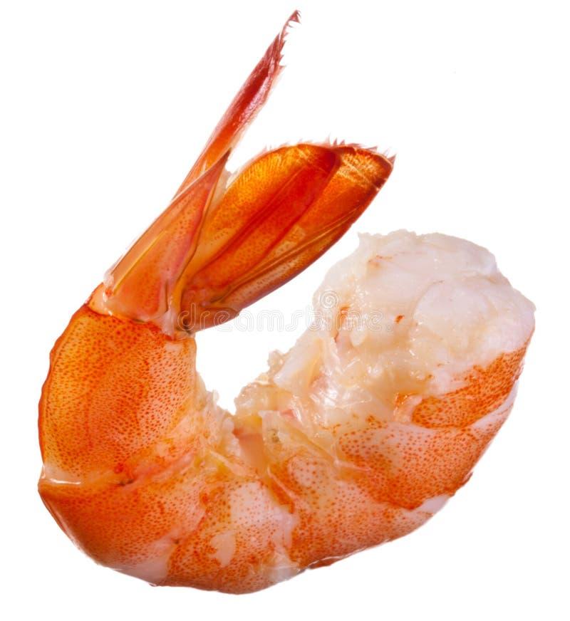 Shrimp isolated royalty free stock photo